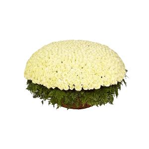 Букет из 1001 белой розы